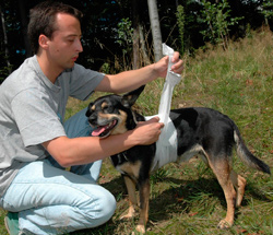 Haustierseminar: Erste Hilfe