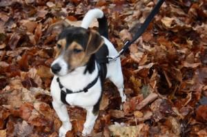 Hund bei Wanderung
