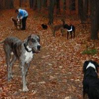 Hundetagestätte