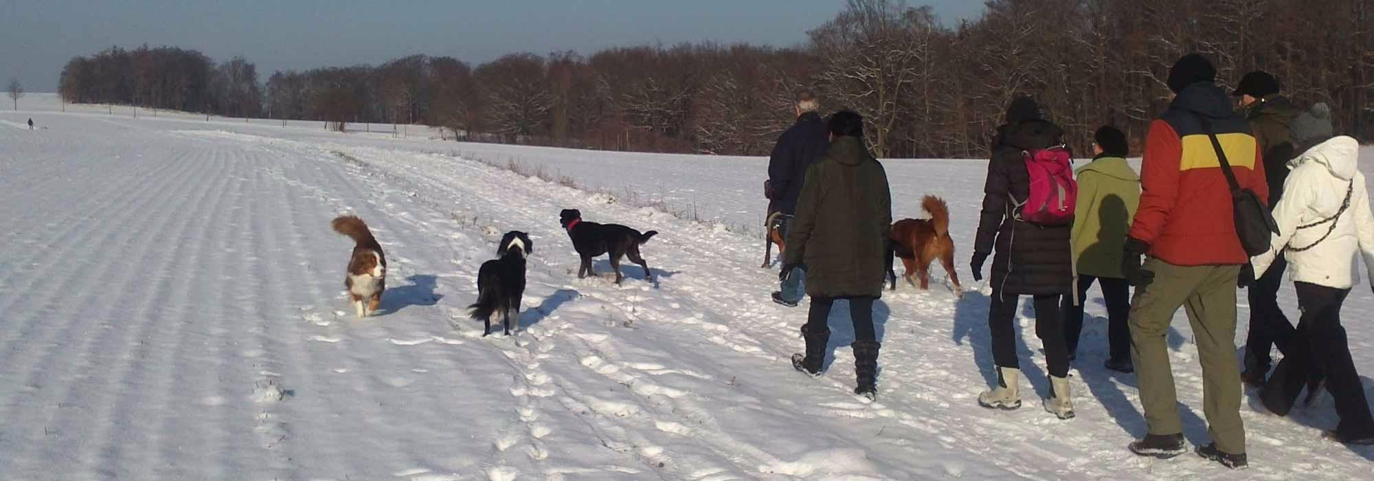 AnimalmanShip biete Hundewanderungen in der Dresdener Heide an