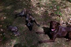 drei-hunde-wald