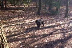hund-wald2