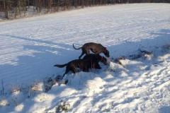 hunde-im-winter-2