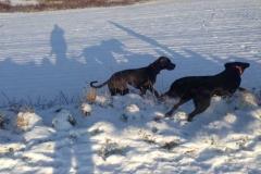 hunde-im-winter