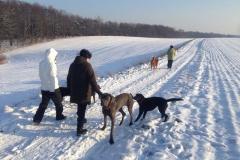 hundewanderung-dresden