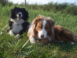 Therapiehunde Jess und Oskar