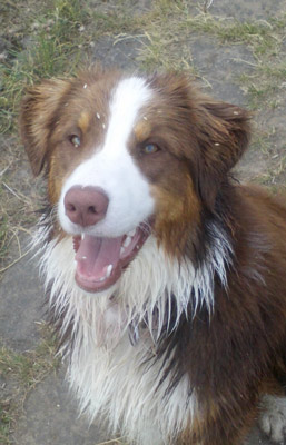 Hund in Hundeschule