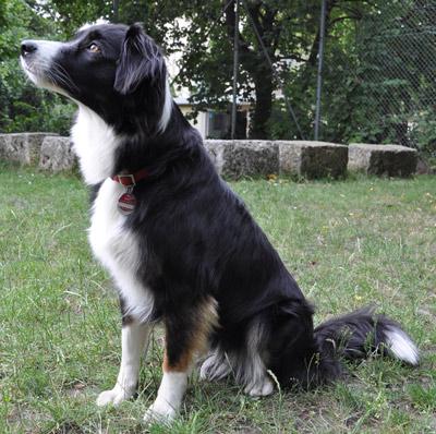 Hunde-Einzeltraining