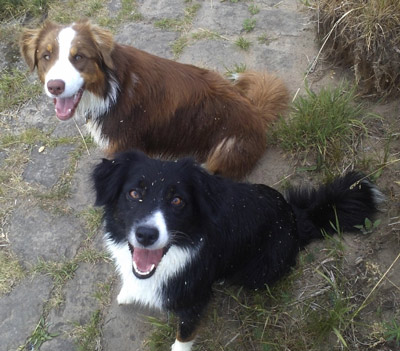 Hundeschule-Gruppentraining