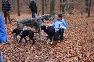 Hunde und Kind bei Wanderung in der Dresdener Heide