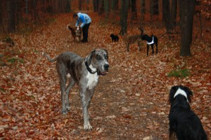 Hundebetreuung in Dresden