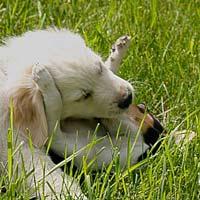 Tierpsychologie: Hunde, Katzen, Pferde